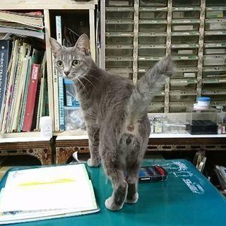 強制退去の部屋に置き去りにされた猫ちゃん