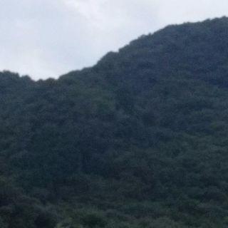 後楽園ドーム球場の1、4倍の山林オーナーになりませんか?