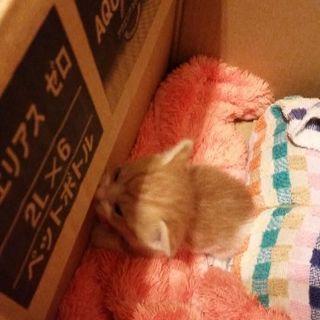 生後3週間の子猫ちゃんです