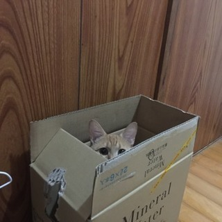 猫ちゃん用のトイレを下さい!