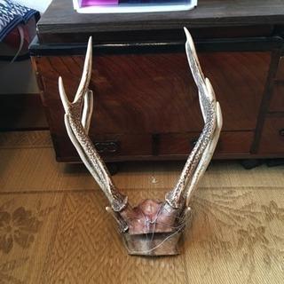 鹿の角が欲しいです