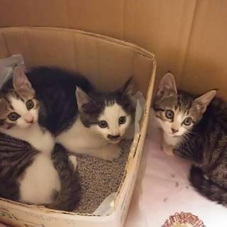 【推定2ヶ月】子猫の里親募集