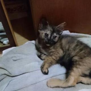 7月9日生まれの猫ちゃん♪黒、チャトラは決まりましたm(__)m