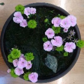 花の資格!日本フラワーデザイナー協会 新検定対応