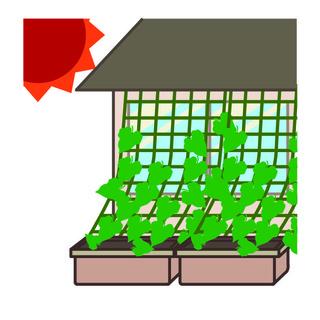 グリーンカーテンの会(カーテンの季節以外は気軽な家庭菜園♪)