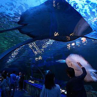 9月21日(9/21)  イルカやアシカのショーも楽しめる!水族館...
