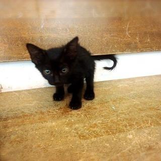子猫(クロネコ)の里親募集 - 島尻郡