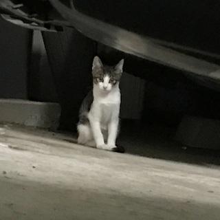 子猫の里親募集中