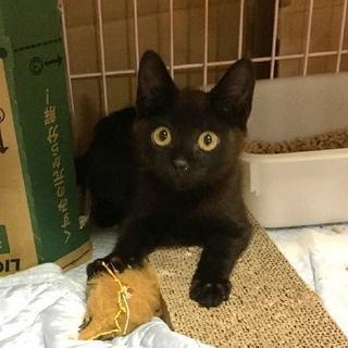 子猫の里親募集してます。大切に飼って頂ける方ご連絡下さい。