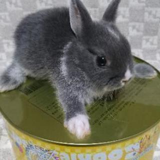 ウサギ5羽の里親募集