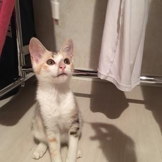 とても賢い保護子猫、もらってください!