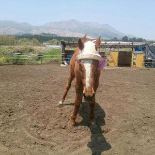 南阿蘇の余生馬牧場で お馬達に触れ合ってみませんか。
