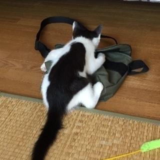 【募集停止】里親募集 - 猫