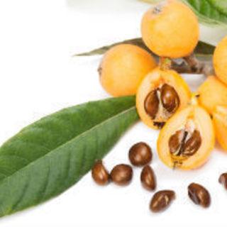 日本最古の民間療法 ビワの葉健康法を学ぶ