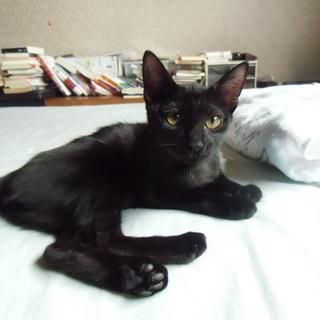 人なつこい寄り添い黒猫ちゃん