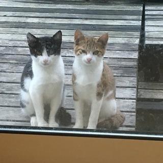 5ヶ月の野良猫ちゃん達