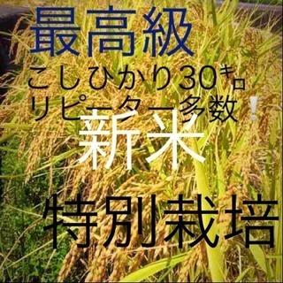 こだわり栽培 愛媛県東温市こしひかり30㌔玄米