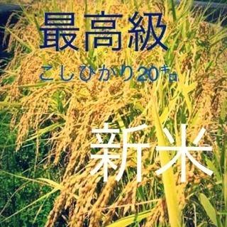 こしひかり30㎏ 玄米 こだわり栽培 愛媛県東温市