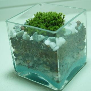 インテリア用苔テラリウム(解放型)