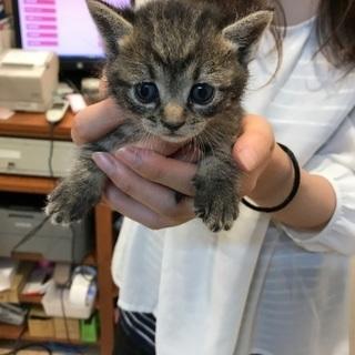 職場で救出された赤ちゃん猫です!