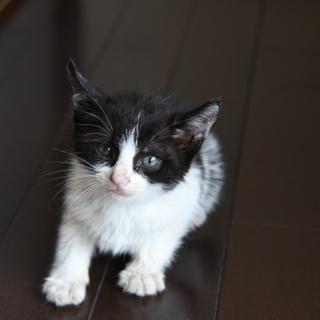 里親さん見つかりました。子猫 まだ1か月もたっていないと思います。