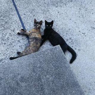 野良猫の姉妹