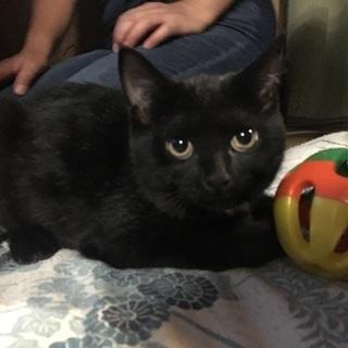 6ヶ月の猫ちゃん