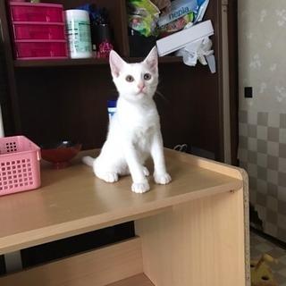 産まれて4ヶ月目くらいの猫です。