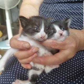 生後2週間ほどの子猫です