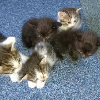 8月5日産まれの子猫5匹