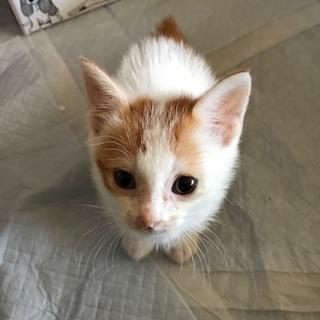 ネコの赤ちゃん里親募集中!