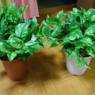 【あと残り3つ❗】人工観葉植物(ポトス)