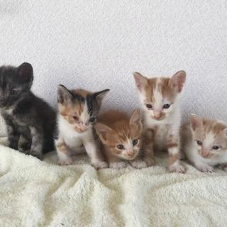 大垣市 いろんな柄の子猫5匹 雑種