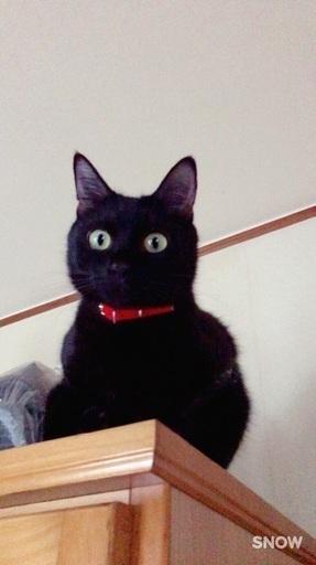 ジジのような可愛い黒ネコです まやたろ 大阪の猫の里親募集ジモティー