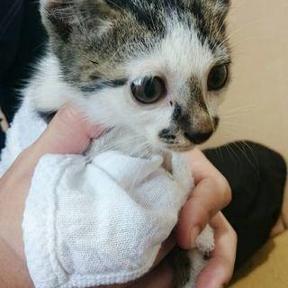里親募集!トラ模様の可愛い子猫です