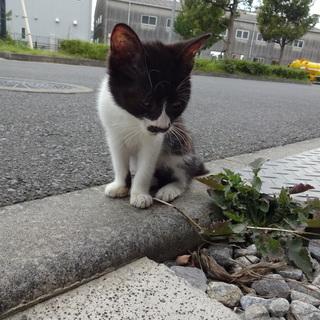 人懐っこい子猫の里親募集