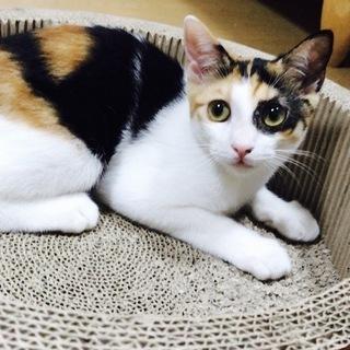 お目目パンチ 三毛猫の女の子  動画あり