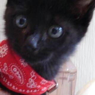 黒仔猫オス 里親のお願い
