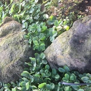 庭石を譲ります