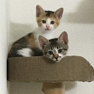7月22日生まれの子猫3匹^ ^