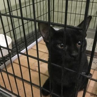可愛い黒猫子猫その2