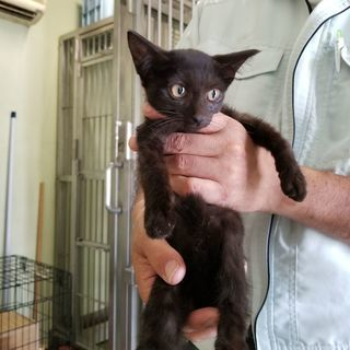 可愛い黒猫子猫その3