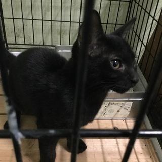 可愛い黒猫子猫その4