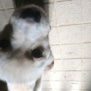 mix犬生後4ヶ月の子犬の里親募集