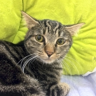 10月8日(日) 猫の譲渡会 名古屋市西区 ふれあい館 みなと猫の会主催