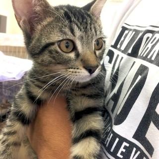 10月29日(日) 猫の譲渡会 名古屋市西区 ふれあい館 円頓寺商...