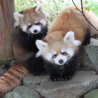 10月7日(10/7)  楽しい話題豊富!横浜の野毛山動物園を満喫...