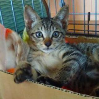 雄の子猫3ヶ月です