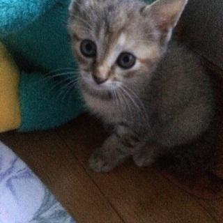仔猫7月生まれ女の子