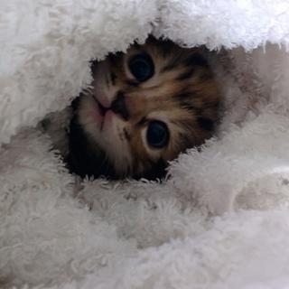 子猫の里親希望された方と連絡とれないです